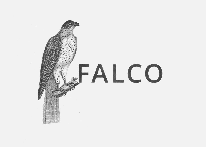 portfolio falco brand 03